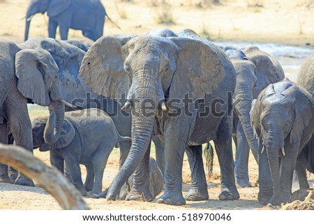 stock-photo-herd-of-elephants-standing-n