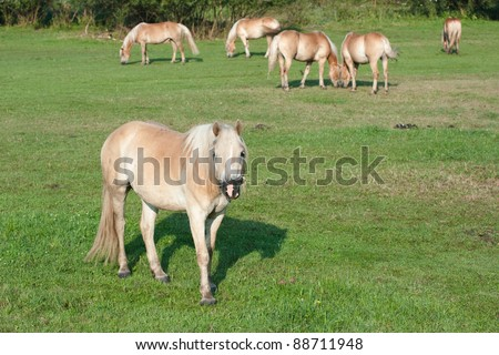 herd of horses are grazing on the meadow
