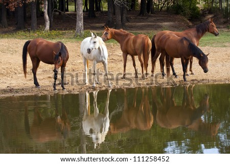 Herd of horses at pond