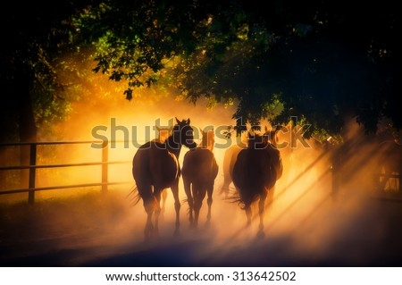 herd of horses back to the pasture in the countryside, English horses