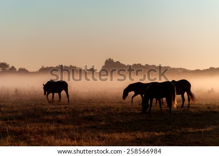 Herd of horses grazing in a field on a background of fog and sunrise. Horse silhouettes.