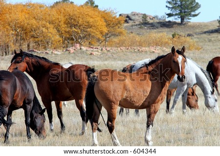 Herd of horses in Autumn