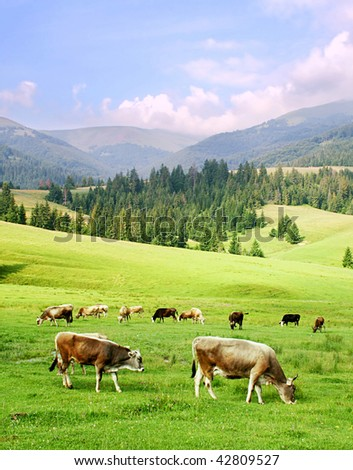 herd of horses in the Carpathian Mountains