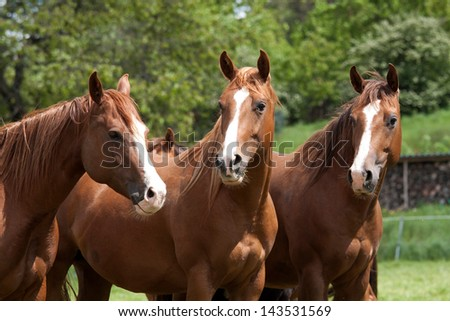 Herd of horses in the pasture #143531569