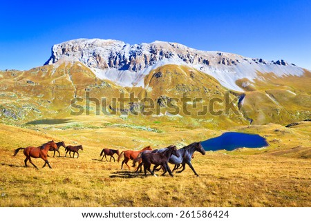 Herd of horses run in valley,mountains in the background.Picture was taken during trekking hike in  wonderful and stunning Caucasus at autumn, Arhiz region, Abishira-Ahuba ,Karachay-Cherkessia, Russia