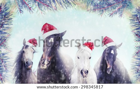 Stock Photo Herd of horses with Santa hat on winter snow and Christmas tree background. Banner for website.