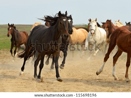 Herd of hurrying Horse on the field.