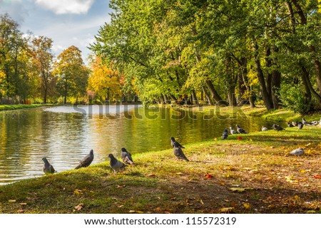 Herd of pigeons on autumn river in the park