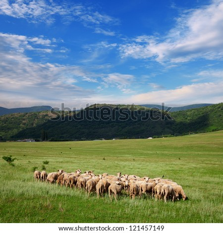 Herd of sheep grazing on pasture on a background of mountains and blue sky with clouds