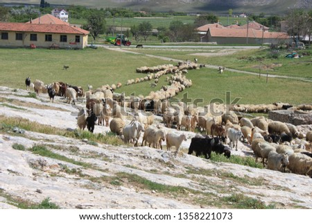 Herd of sheep herd - Herd #1358221073
