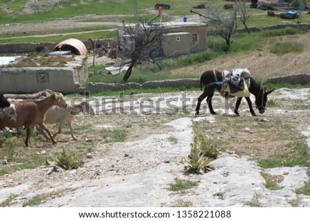 Herd of sheep herd - Herd #1358221088