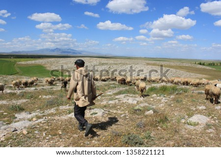 Herd of sheep herd - Herd #1358221121