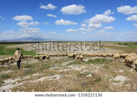 Herd of sheep herd - Herd #1358221130