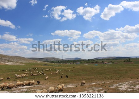 Herd of sheep herd - Herd #1358221136
