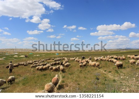 Herd of sheep herd - Herd #1358221154
