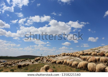 Herd of sheep herd - Herd #1358221160
