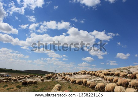 Herd of sheep herd - Herd #1358221166