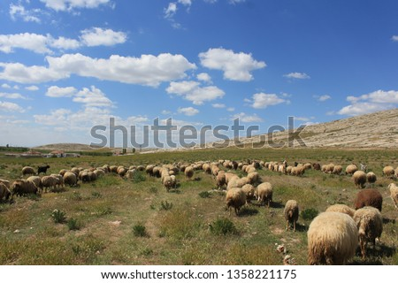 Herd of sheep herd - Herd #1358221175