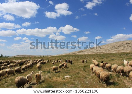 Herd of sheep herd - Herd #1358221190