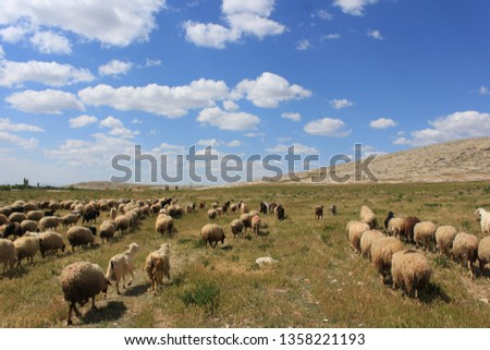 Herd of sheep herd - Herd #1358221193