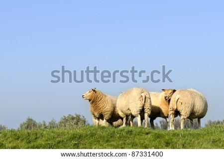 herd of sheep in beautiful winter sunlight #87331400