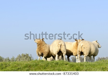 herd of sheep in beautiful winter sunlight #87331403