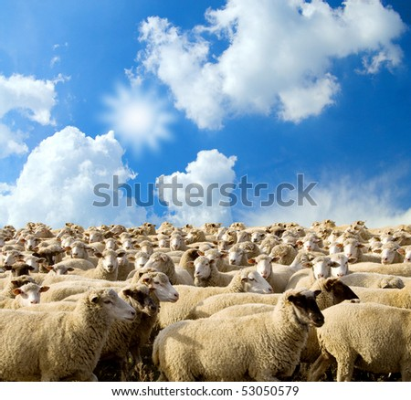 herd of sheep on a background blue sky with clouds.farming. - stock photo