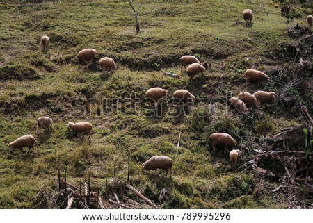 Herd of sheep on the mountain, tame mammals #789995296
