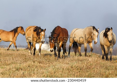 Stock Photo Herd of the horses