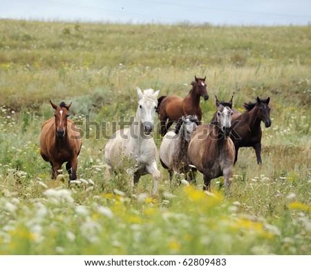 horses running free. horses running free. wild