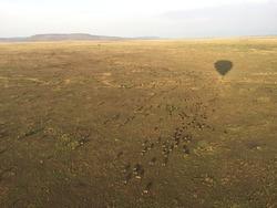 Herd of wildebeests migrating in Serengeti National Park, Balloon view, Serengeti, Tanzania, October 2017