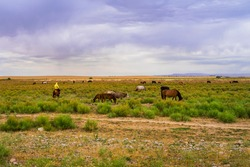 Herds of animals in the pasture. Storm clouds in the sky. Horses and cows graze in the steppe. Summer steppe landscape. Pasture. Meadow with green grass and flowers. Animal shepherd grazes.