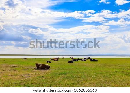Herds on the grasslands of Inner Mongolia #1062055568