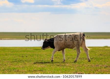 Herds on the grasslands of Inner Mongolia #1062057899