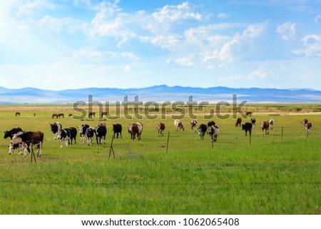 Herds on the grasslands of Inner Mongolia #1062065408