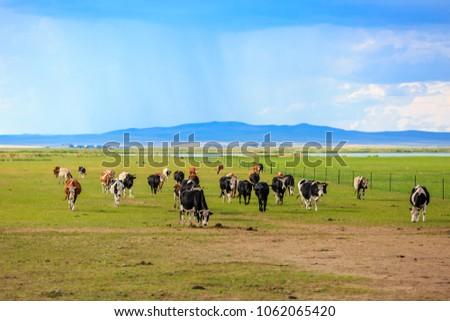 Herds on the grasslands of Inner Mongolia #1062065420