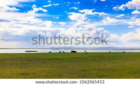 Herds on the grasslands of Inner Mongolia #1062065453