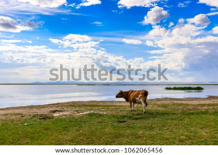 Herds on the grasslands of Inner Mongolia #1062065456