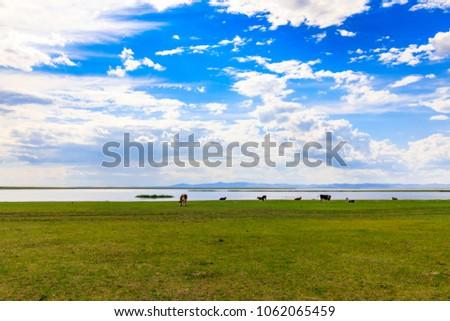 Herds on the grasslands of Inner Mongolia #1062065459