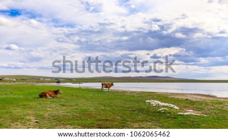Herds on the grasslands of Inner Mongolia #1062065462