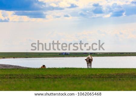 Herds on the grasslands of Inner Mongolia #1062065468