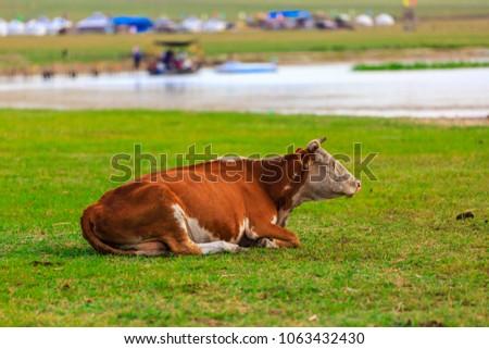 Herds on the grasslands of Inner Mongolia #1063432430