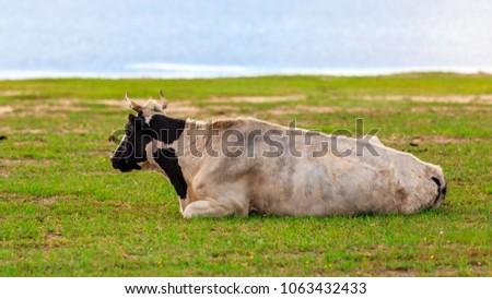 Herds on the grasslands of Inner Mongolia #1063432433