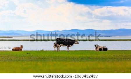 Herds on the grasslands of Inner Mongolia #1063432439