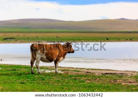 Herds on the grasslands of Inner Mongolia #1063432442