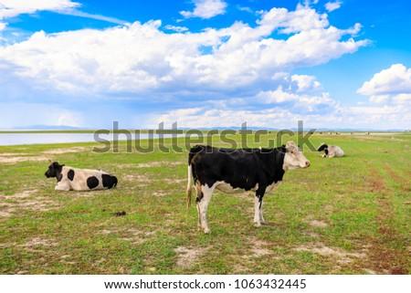 Herds on the grasslands of Inner Mongolia #1063432445