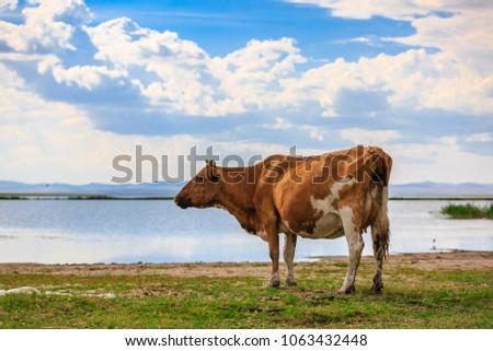 Herds on the grasslands of Inner Mongolia #1063432448