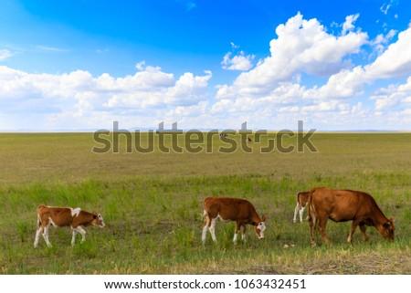 Herds on the grasslands of Inner Mongolia #1063432451
