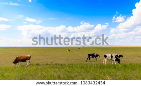Herds on the grasslands of Inner Mongolia #1063432454