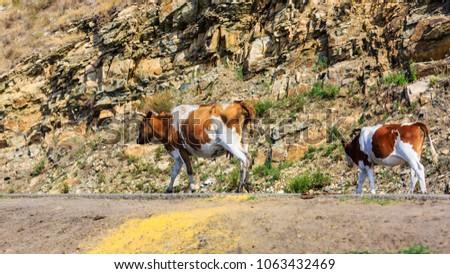 Herds on the grasslands of Inner Mongolia #1063432469